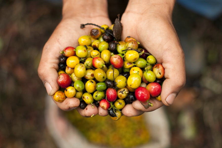 colombian coffee photo by dennis drenner
